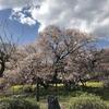 静岡県富士宮市にて狩宿の下馬桜を賞でる(2018年4月7日と8日)