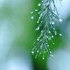 GWスタートは冷たい雨