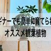 ビギナーでも簡単に育てられるオススメ観葉植物