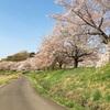 桜並木と風水とおすすめの音楽