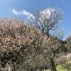 東京の梅まつり~東京23区内の梅の名所・梅園・梅林まとめ~