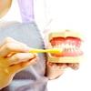 1歳半歯科健診に行って驚いた。次男の「仕上げ磨きを泣いて嫌がる」のが治った理由。