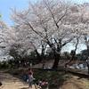 多摩川桜百景 -89. ねこじゃらし公園-