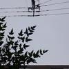 作曲工房 朝の天気 2018-08-08(水)小雨。台風第13号(サンサン)接近。