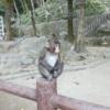 高崎山自然動物公園|動物園 日記