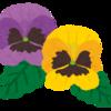 有為自然 619   キメツの花壇 ツバキ騒動 ゴミ勝利宣言
