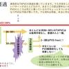 総肺静脈還流異常(TAPVC, TAPVR)について 出生時の診断と手術について 疾患34