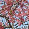 えぃじーちゃんのぶらり旅ブログ~九州編20190309長崎県大村市