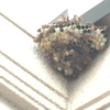 浜松市で壁面にできたハチの巣を駆除してきました