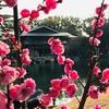 名古屋 徳川園〜建中寺散歩とThe 名古屋な店3選。ラク亭、芳光、喫茶フレンド