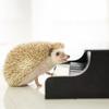ピアノを弾くのが楽しくて(弾けないなりに)♪
