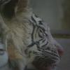 【動物園】姫路セントラルパークへ行ってきました~2~【兵庫】