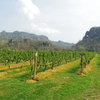 ***GranMonte asok valley*** タイのワイナリーでポリフェノール注入。。。