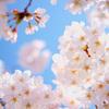 「お花見」に始まって桜と一緒に散った・・・