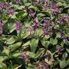 3月29火誕生日の花と花言葉