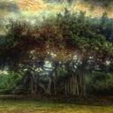菩提樹 ルドラクシャ