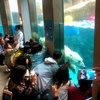 雨の旭川観光は旭山動物園をおすすめ