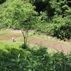 角間のアジジ谷の田んぼ