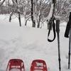 ◆'21/02/06    志津~姥沢駐車場…ブナ林を通って④