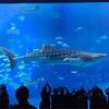美ら海水族館に行ったった。
