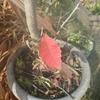 どんぐりの木の11月