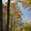 白馬岩岳マウンテンハーバーは紅葉が見ごろ