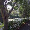 白い花の散歩道