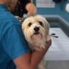 特定の動物病院に富が集中する可能性は? ~犬猫の飼い主が見た、加計学園問題(その4)~