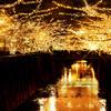 中目黒 目黒川イルミネーション【金色のジュエルドーム】期間や場所、点灯時間は?