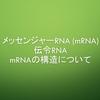 メッセンジャーRNA(mRNA)とmRNAの構造