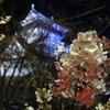 小倉城からの桜だより