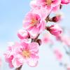 春の憂鬱・春は心身のバランスが崩れやすい