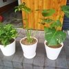 家の中に緑を増やす