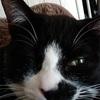 【猫のときわ:お目目が片方おかしくなっちゃった】