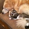飼い主が恋しすぎて心の病にかかった犬。その救世主となったのは子猫だった。