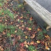 桜並木の下のベンチ
