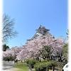 滋賀県長浜市 長浜城の桜