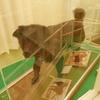 北海道と犬にまつわる話。