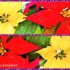 クリスマスの前だから🎅🎄✨それでもってChristmas三昧❣