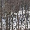 飛騨の景色 『雪解け』