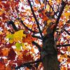 20161127 ちょっと遅いかな秋の紅葉ライド都民の森へGo! - 1126追記