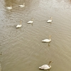 白鳥を見に行くラン、40キロ