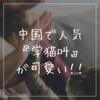 中国で人気の曲『学猫叫』が可愛い!【歌詞・ピンイン・和訳】