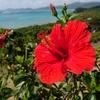 ANA・JALが4/5までの国内線のキャンセル料を無料に。春休みの沖縄旅行をどうするか悩む…