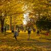 【一日一枚写真】黄金の銀杏並木道 Part.12【一眼レフ】
