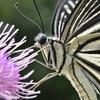 🦋小石川植物園で昆虫撮影!