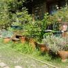庭の草刈り作業
