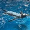 ペンギン百態にいってきた!