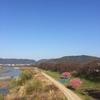お茶の京都博 オープニングイベント 桜茶会 in八幡背割堤