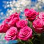 """【雑学】『あなたを愛しています』バラの本数や色に込められた""""意味""""とは???"""
